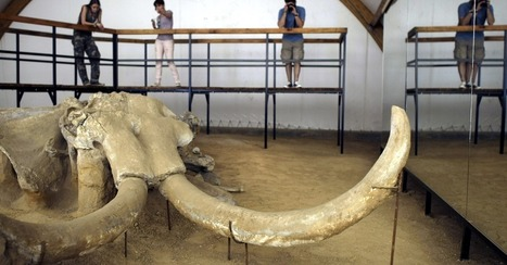 Forget State Birds: South Carolina Makes Woolly Mammoth its State Fossil | Funteresting Stuff | Scoop.it