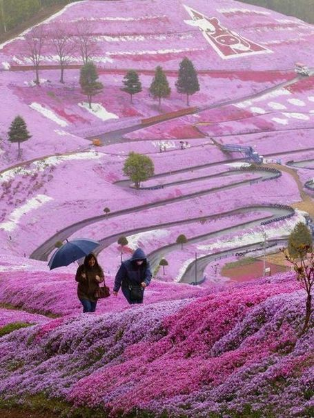 The Breathtaking Flower Hill of Hokkaido | Strange days indeed... | Scoop.it