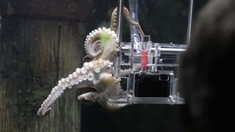 Sony Gave An Octopus At A New Zealand Aquarium A Camera; Trains It To Photograph Tourists - DIY Photography | This is Insane | Scoop.it