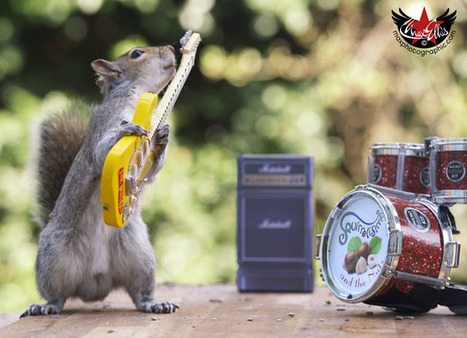 How to Get Squirrels to Use Props in a Photo Shoot | What about? What's up? Qué pasa? | Scoop.it