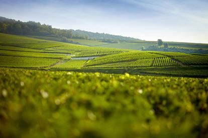 La Champagne se mobilise pour une viticulture plus écologique - Terre de Vins   Vins de Savoie   Scoop.it