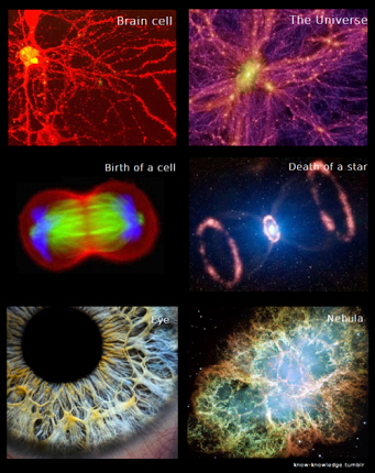Similarities: universe and us | Science | Scoop.it