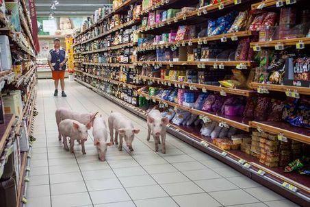 Changeons notre chaîne alimentaire pour résoudre la crise de l'élevage | Les choses qui m'intéressent | Scoop.it