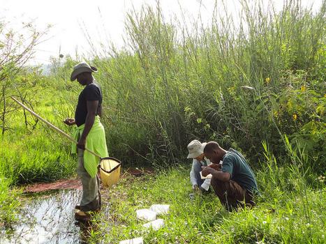 Des chercheurs trouvent un nouveau moyen de contrôler le paludisme | EntomoNews | Scoop.it