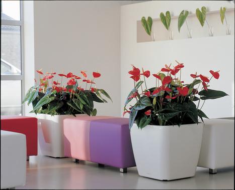 Louer des Plantes | Le Bienfait des Plantes par Déco Plante | La Location de plantes | Scoop.it