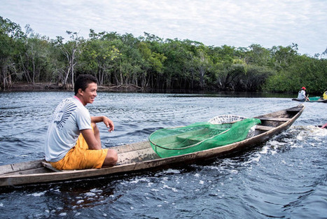 The Tiny Amazonian City That Supplies Aquarium Fish to the World | Aquaculture Directory | Scoop.it