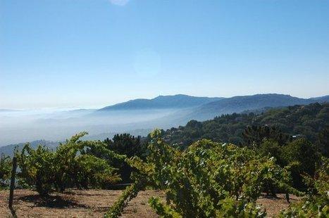 #Wine : Ridge's Monte Bello | Vitabella Wine Daily Gossip | Scoop.it