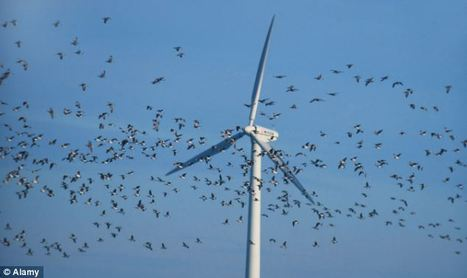 RSPB makes a killing... from windfarm giants behind turbines accused of destroying rare birds | Climat | Scoop.it