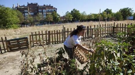 Los huertos urbanos, una tendencia en auge - ABC.es | Cultivos Hidropónicos | Scoop.it