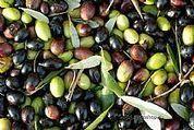 Workshop olio extravergine oliva: etichettatura e nuove procedure ... - PPN - Prima Pagina News | PrimOlio, il Blog | Scoop.it