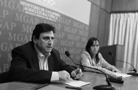 Uruguay / Monocultivos a tierra | MOVUS | Scoop.it