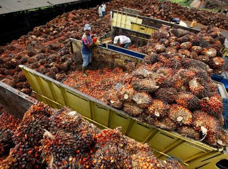 Palm Oil's Human Cost Alleged in New Report | Biodiversity protection | Scoop.it