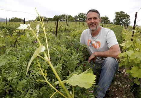 Vaucluse : un nouveau souffle pour les vins sans sulfites | Winemak-in | Scoop.it