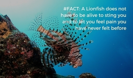Here is How You Should Hunt Lionfish Without Getting Hurt | Bookyourdive | Scoop.it