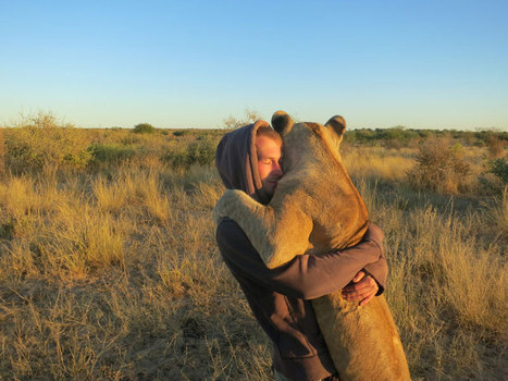 My Close Encounter with Lions in Botswana | xposing world of Photography & Design | Scoop.it