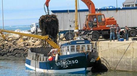 Algues : Cargill doit se mettre en conformité | Les algues en Bretagne | Scoop.it