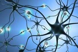 Plasticité cérébrale | Cerveau intelligence | Scoop.it