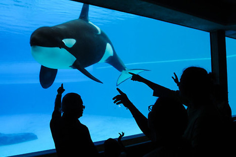 #Canada's #Marineland Threatens Ex-Trainer With Defamation Suit | Rescue our Ocean's & it's species from Man's Pollution! | Scoop.it