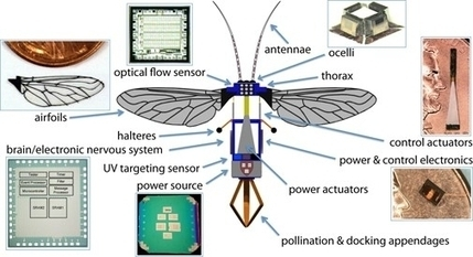 5 Examples of Insect-Inspired Robotics | Robots and Robotics | Scoop.it