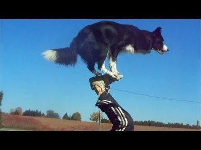 Nana the Border Collie Performs Amazing Dog Tricks | War In The Ukrain | Scoop.it