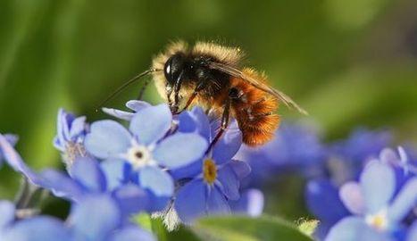 Insecticides tueurs d'abeille: les députés votent des dérogations jusqu'en 2020 | Apiculture, agriculture et environnement | Scoop.it