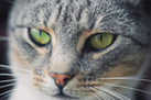 Here, Kitty, Kitty: 10 Facts for Cat Lovers   Cute Baby Animals   Scoop.it