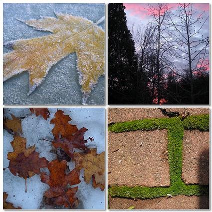 Outdoor Hour Challenge - Winter World Colors | Benefits of Nature | Scoop.it
