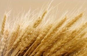 La enfermedad celíaca en sus presentaciones atípicas | Gluten free! | Scoop.it