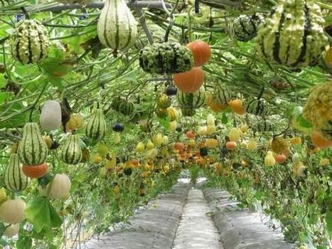 Permaculture : Concevoir un jardin pour nourrir une famille de 4 personnes ! | Kilométrage alimentaire | Scoop.it