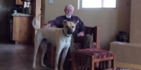 VIDEO. Alzheimer : Charles Sasser retrouve la parole grâce à son chien | CaniCatNews-actualité | Scoop.it