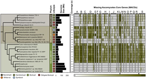 ABR: The Genomics of Powdery Mildew Fungi: Past Achievements Present Status and Future Prospects | plant immunity | Scoop.it