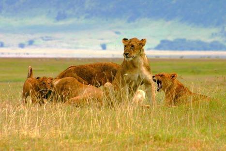 Tiger tour by INDRI Wildlife Tours | Wildlife cruises | Scoop.it