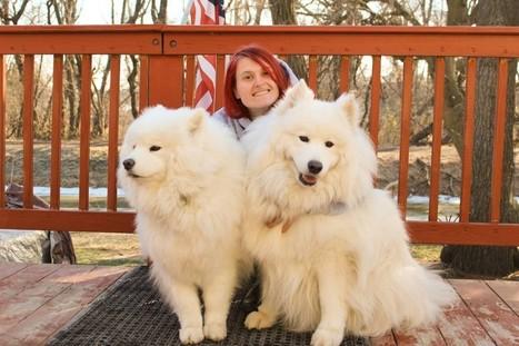 Dog Walkers / Walking in Bucks County, South Jersey & Philadelphia | Sitters4Critters, LLC | Sitters 4 Critters | Scoop.it
