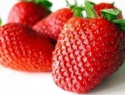 Frutillas Organicas Premium   strawberry   Scoop.it