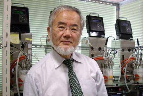 Nobel Prize in Medicine Awarded to Japan's Yoshinori Ohsumi   Japanese Science & Technology News   Scoop.it