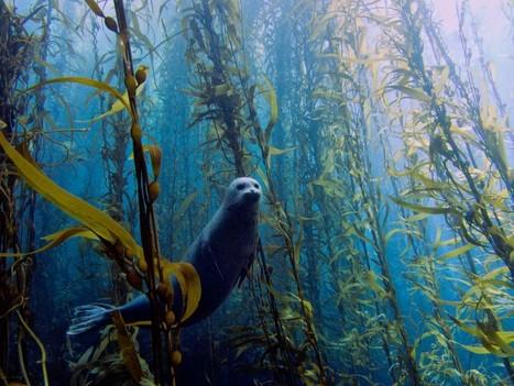 Stunning underwater photos capture beauty of sea life | Science | Scoop.it