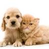 Animal Website Design