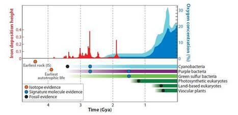 AnnuRevPlantBiol (2011) Evolution of Photosynthesis | javierar | Scoop.it