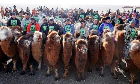 World view: Camel lot in the Gobi desert, Mongolia | Travel Bites &... News | Scoop.it