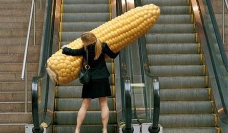 OGM: l'UE renvoie aux Etats la décision finale - Le Quotidien.lu   Abeilles, intoxications et informations   Scoop.it