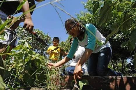School gardens in Bell Gardens, CA feed a community | School Gardening Resources | Scoop.it