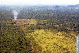 USAID se une a asociación para combatir deforestación en región amazónica | IIP Digital | deforestacion en la selva amazonica | Scoop.it