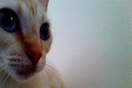 Photo-Sharing App Lets Cats Take Their Own Selfies - PSFK | Interesting Apps | Scoop.it