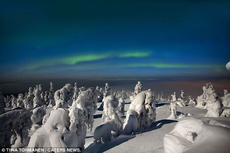 And you thought it was cold here: Beautiful pictures capture the eerie stillness of Lapland's frozen sub-Arctic forests | Finland | Scoop.it