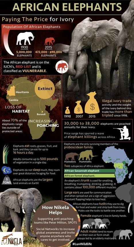 Why is the African Elephant's Survival in Jeopardy? | Wildlife Trafficking: Who Does it? Allows it? | Scoop.it