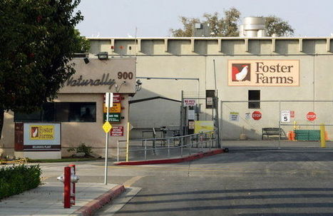 Foster Farms outbreak: Illness continue despite company's crackdown on salmonella | Food issues | Scoop.it