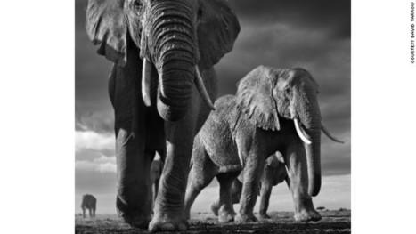 The haunting wildlife photography of David Yarrow | ART's news | Scoop.it