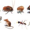 شركة مكافحة حشرات بالرياض, مكافحة حشرات, | 056788709 شركة تنظيف بالرياض | Scoop.it