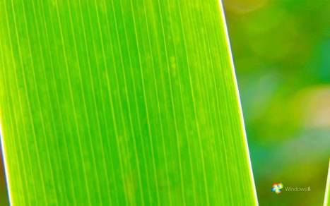 nature green picture hd 833 wallpaper | naturewallpaperhd | Scoop.it