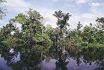 Tropical Forests in Our Daily Lives | Rainforest Alliance | Rainforests, Waterfalls, Rivers, Lakes & Oceans | Scoop.it